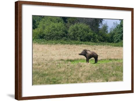 Boar/Hog Willow Sculpture in Meadow--Framed Art Print