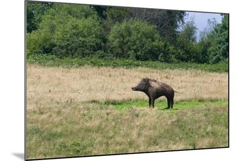 Boar/Hog Willow Sculpture in Meadow--Mounted Photographic Print