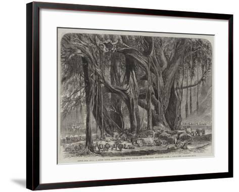 Cotton from India--Framed Art Print