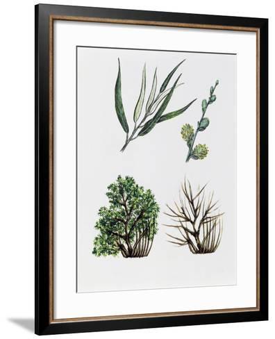 Common Osier or Osier Tree (Salix Viminalis)--Framed Art Print