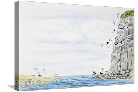Cliff Environment Birds :Atlantic Puffin--Stretched Canvas Print