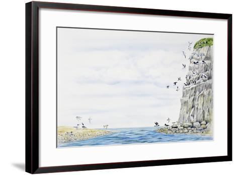 Cliff Environment Birds :Atlantic Puffin--Framed Art Print