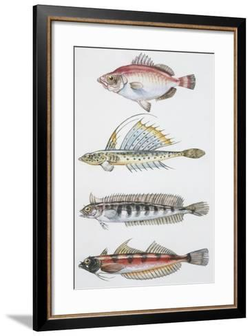 Fishes: Perciformes--Framed Art Print