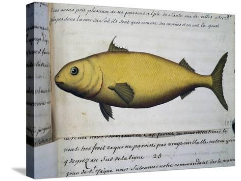 Fish as Big as Cod--Stretched Canvas Print