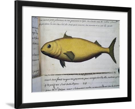 Fish as Big as Cod--Framed Art Print