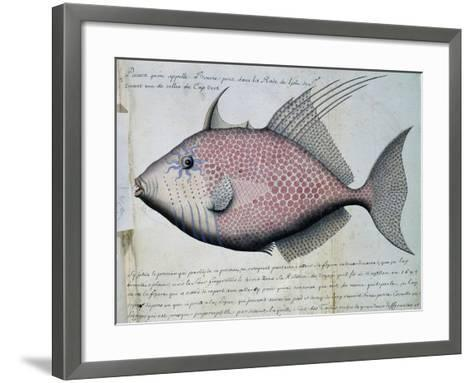 Fish Called Bource--Framed Art Print