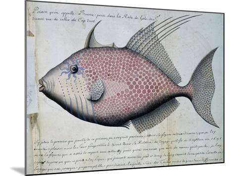 Fish Called Bource--Mounted Giclee Print