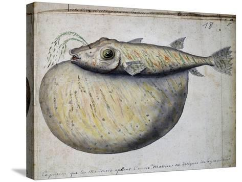Fish Called Crocros--Stretched Canvas Print