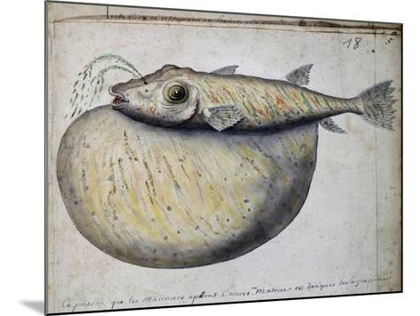Fish Called Crocros--Mounted Giclee Print
