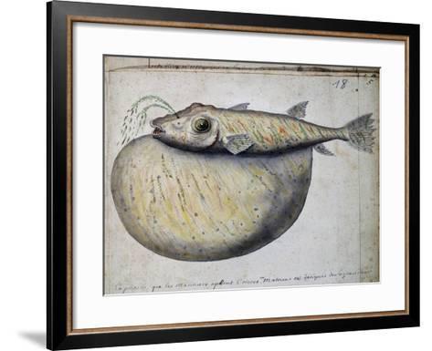 Fish Called Crocros--Framed Art Print