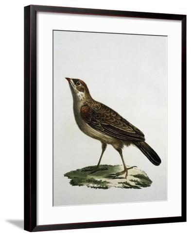 Female Cuckoo Roller--Framed Art Print