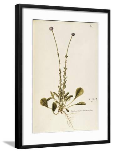 Gobulariaceae--Framed Art Print