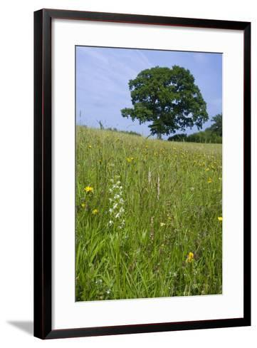 Greater Butterfly Orchid (Platanthera Chlorantha) Flowering on Hay Meadow on Set-Aside Field in Rur--Framed Art Print