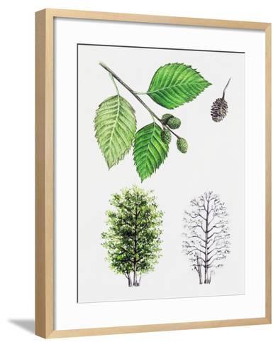 Grey Alder or Speckled Alder (Alnus Incana)--Framed Art Print