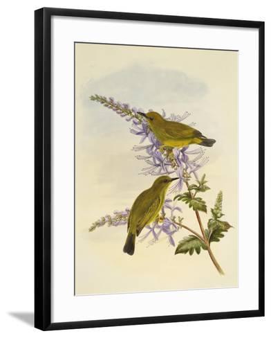 Grey-Throated White-Eye (Zosterops Rendovae)--Framed Art Print