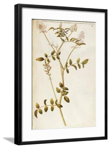 French Honeysuckle (Hedysarum Coronarium)--Framed Art Print