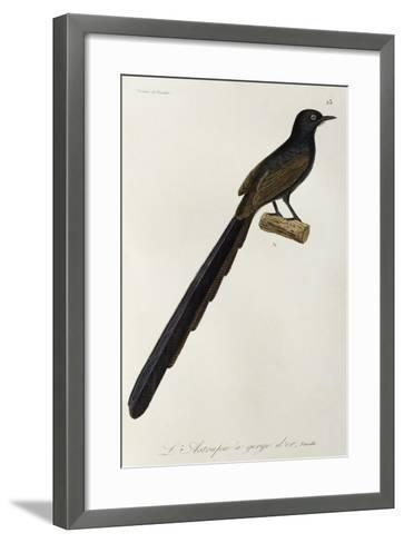 Gorget Bird-Of-Paradise Female--Framed Art Print