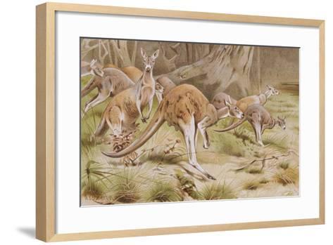Giant Kangaroo--Framed Art Print