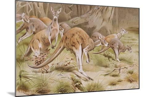 Giant Kangaroo--Mounted Giclee Print