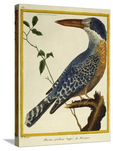 Giant Kingfisher (Megaceryle Maxima)--Stretched Canvas Print