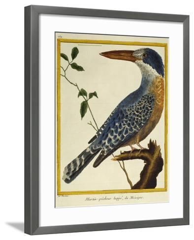 Giant Kingfisher (Megaceryle Maxima)--Framed Art Print