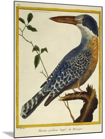Giant Kingfisher (Megaceryle Maxima)--Mounted Giclee Print