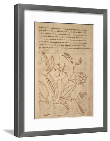 Illustration from Trattato Sui Fiori Dei Parchi Delle Ville--Framed Art Print