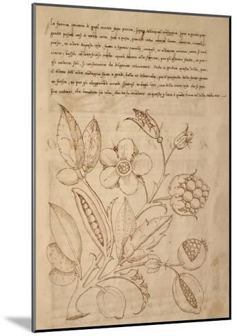 Illustration from Trattato Sui Fiori Dei Parchi Delle Ville--Mounted Giclee Print