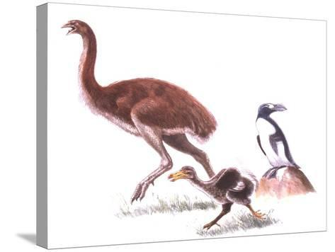 Illustration Representing Moa (Dinornithidae)--Stretched Canvas Print