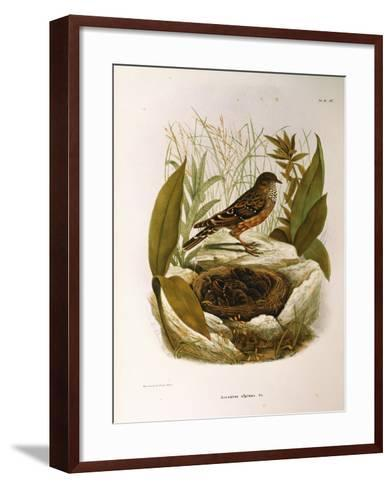 Illustration from Eugenio BettoniS Natural History of Birds That Nest in Lombardy Representing Alpi--Framed Art Print