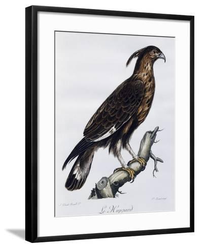 Long-Crested Eagle (Lophaetus Occipitalis)--Framed Art Print