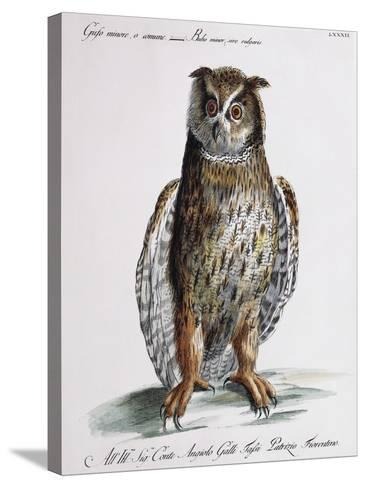 Long-Eared Owl (Bubo Minor Sive Vulgaris)--Stretched Canvas Print