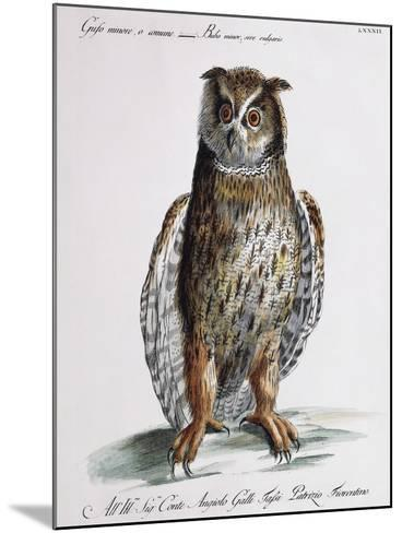 Long-Eared Owl (Bubo Minor Sive Vulgaris)--Mounted Giclee Print