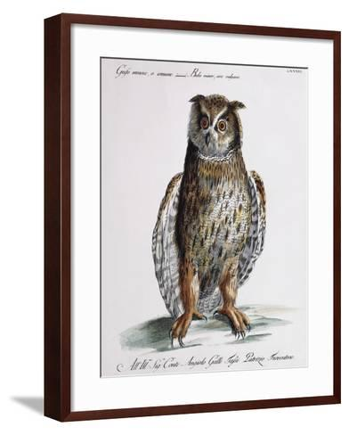 Long-Eared Owl (Bubo Minor Sive Vulgaris)--Framed Art Print
