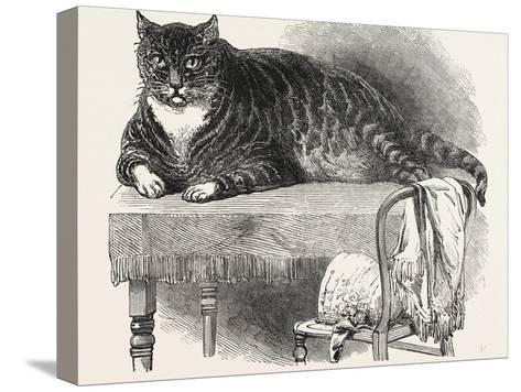 Large Cat--Stretched Canvas Print