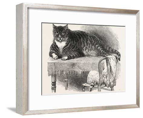 Large Cat--Framed Art Print