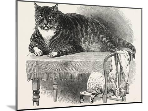 Large Cat--Mounted Giclee Print