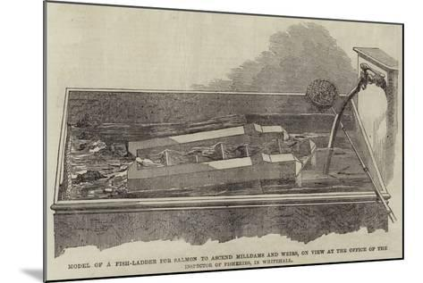 Model of a Fish-Ladder for Salmon to Ascend Milldams and Weirs--Mounted Giclee Print