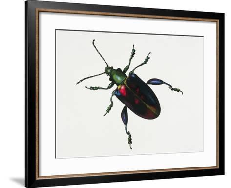 Malayan Frog Beetle or Frog-Legged Leaf Beetle (Sagra Buqueti)--Framed Art Print