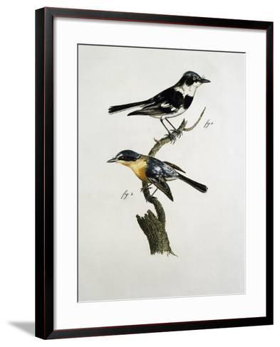 Male and Female of Pririt Batis (Batis Pririt)--Framed Art Print