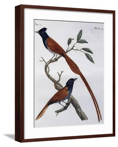 Male and Female of Spotted Flycatcher (Muscicapa Striata)--Framed Art Print