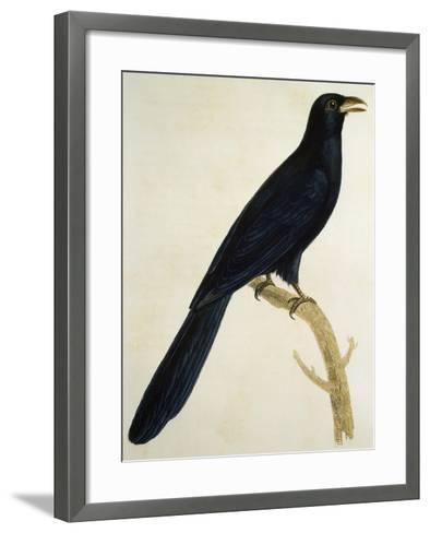 Male Coucou a Gros Bec--Framed Art Print