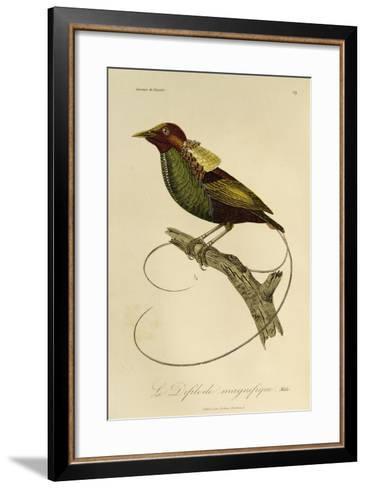 Male of Magnificent Bird-Of-Paradise (Cicinnurus Magnificus)--Framed Art Print