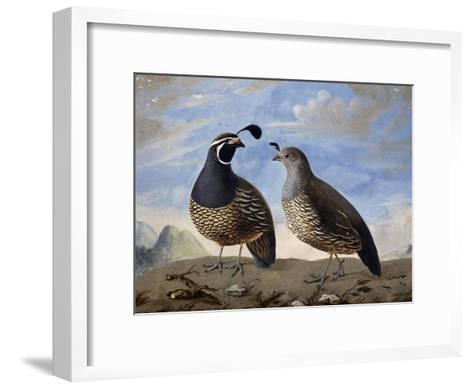 Pair of Californian Partridges--Framed Art Print