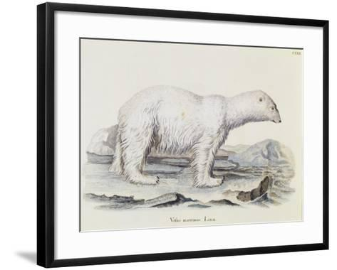 Polar Bear (Ursus Maritimus)--Framed Art Print