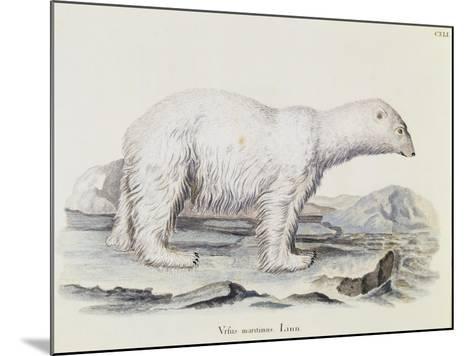 Polar Bear (Ursus Maritimus)--Mounted Giclee Print