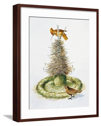 Pair of Macgregor's Bowerbirds (Amblyornis Macgregoriae)--Framed Art Print