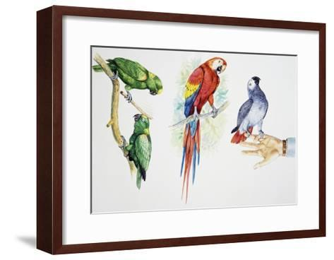 Pair of Yellow-Crowned Amazon (Amazona Ochrocephala)--Framed Art Print