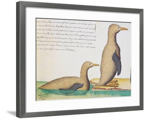 Penguins--Framed Art Print