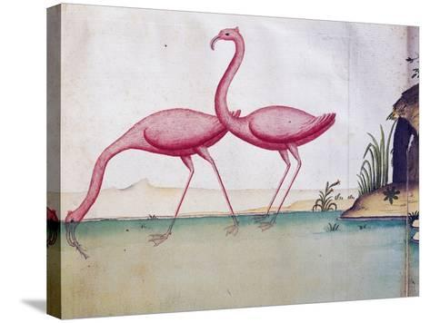 Pink Flamingos--Stretched Canvas Print